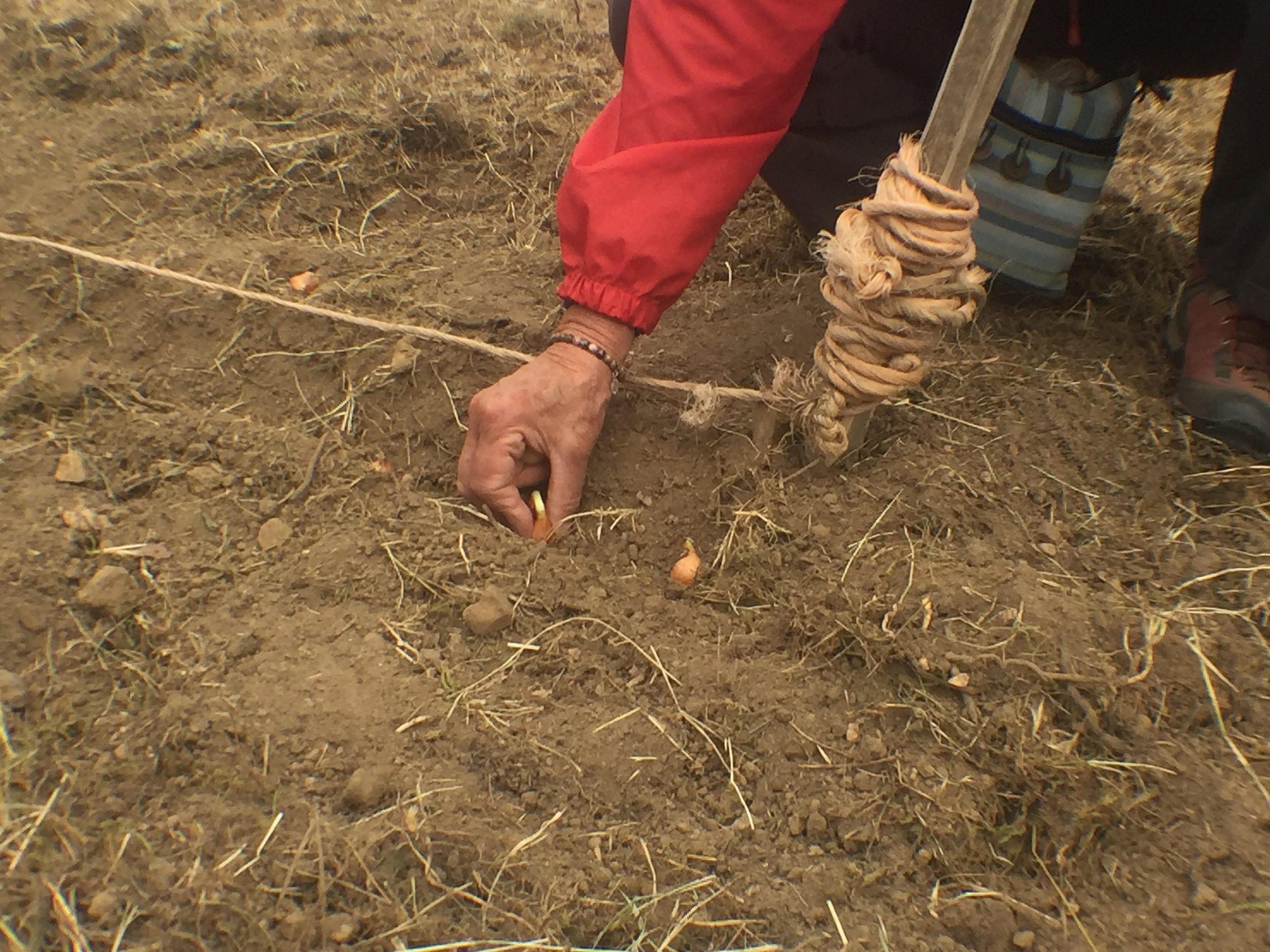 Sécurité alimentaire : le Bocage a la patate… et des idées