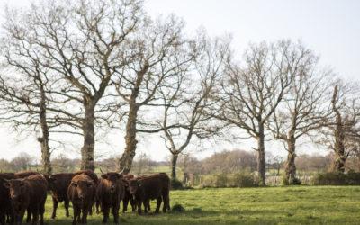 Terres agricoles : l'enjeu de la transmission